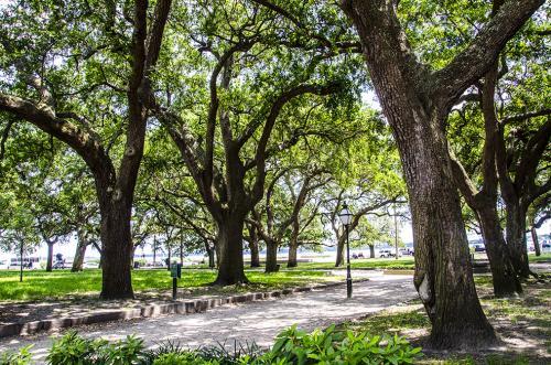 Charleston park 12x