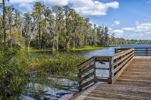 Florida lake 18x`12