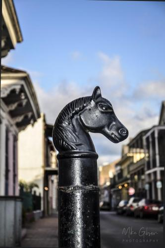 Horse head hitching post Frfench Quarter New Orleans 12x18
