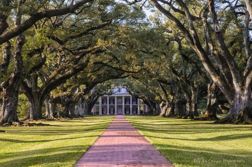 Oak Alley Plantation, Louisiana 12x