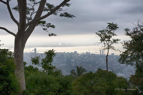 Penang forest viwe 12x