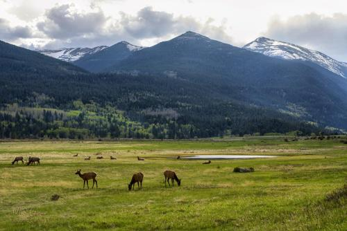 Rocky Mountain National Park with deer 18x12