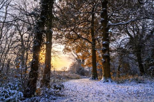 Sunrise woodland walk with snow mgp
