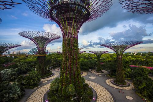 The Gardens on the Bay Singapore 3 12x8