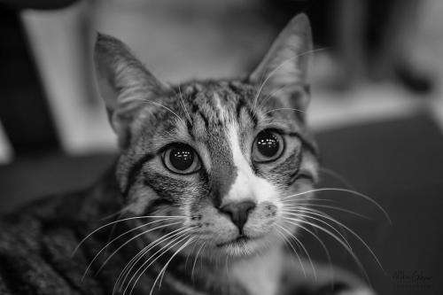 Turkish cat - Istanbul