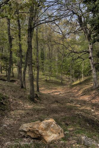 Woodland Puglia 12x