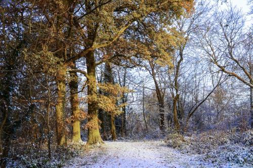 Woodland path with snow mgp