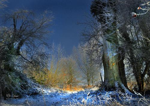 Woodland snow HDR