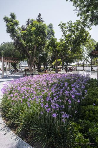 mijas flowers 12x