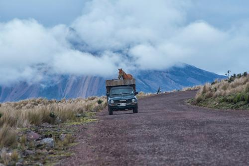 Horse in truck going to Antisana National Reserve