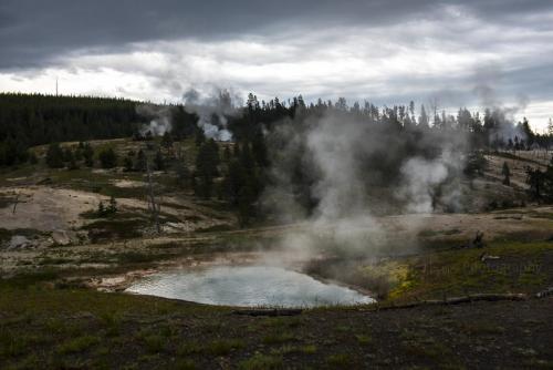 Yellowstone 11 x