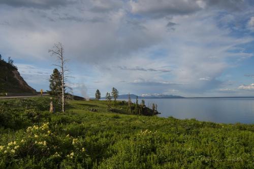 Yellowstone 1 x (1)